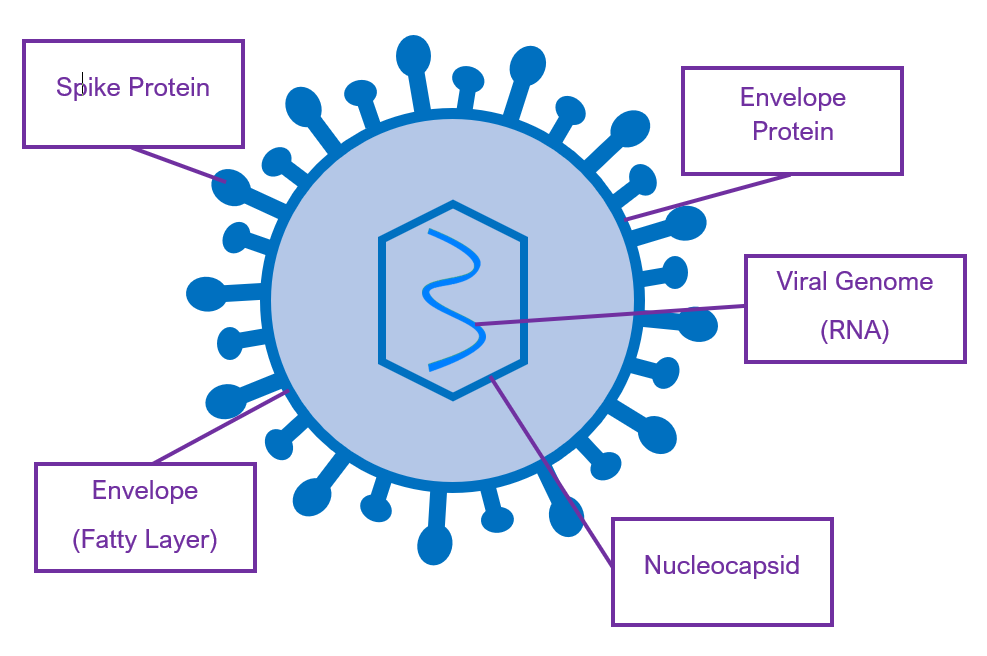 Corona Virus Diagram
